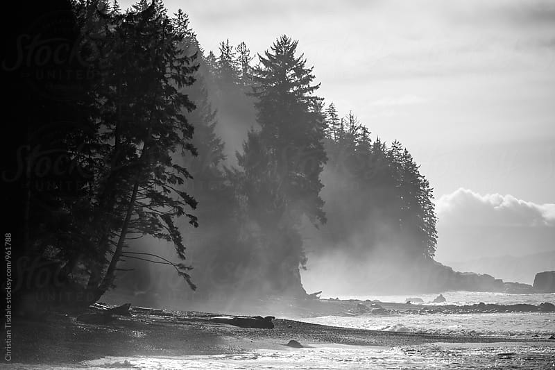 Trees on the coast in layered fog by Christian Tisdale for Stocksy United