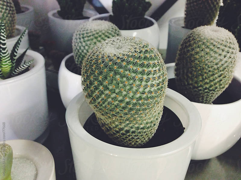 Cactus Plants by Magida El-Kassis for Stocksy United