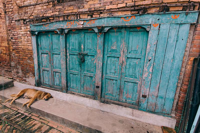 Blue doors and stray dog on the street by Alejandro Moreno de Carlos for Stocksy United