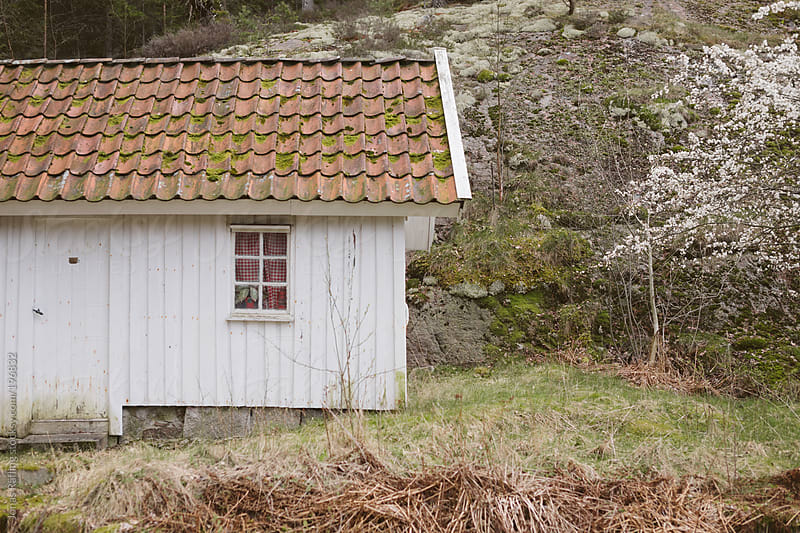 Small wodden hut with a white three by Jonas Räfling for Stocksy United