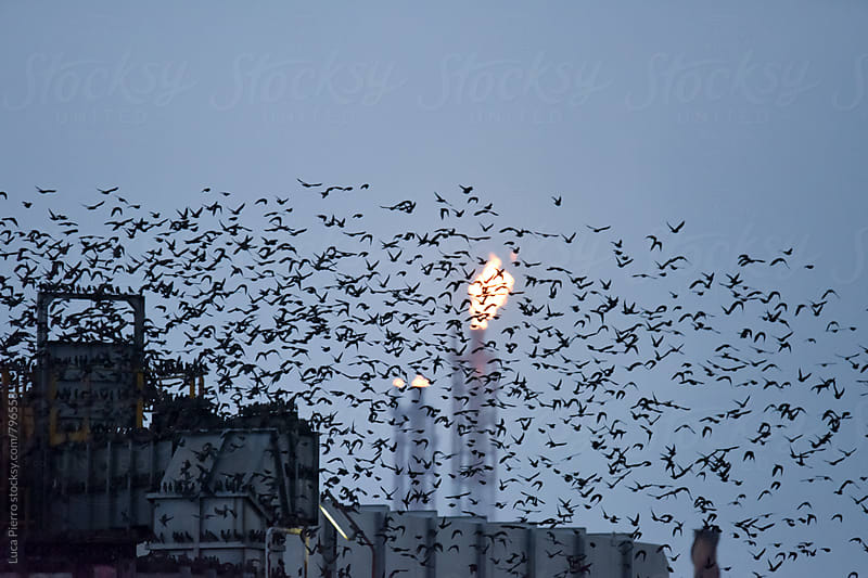Birds over an oil and gas refinery by Luca Pierro for Stocksy United