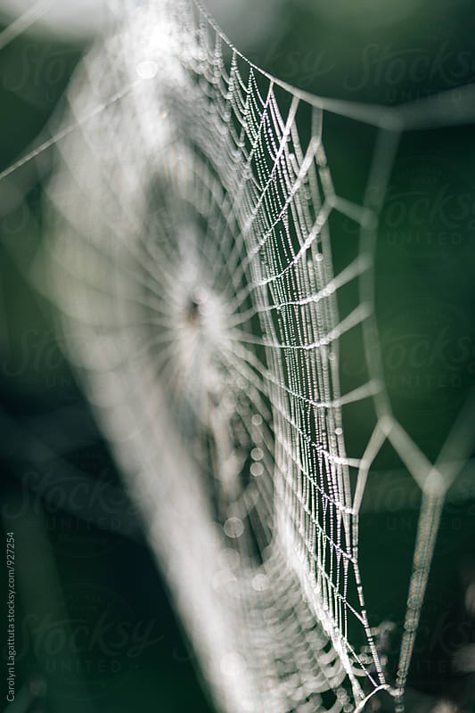 Dewy spider web glistening in the sun by Carolyn Lagattuta for Stocksy United