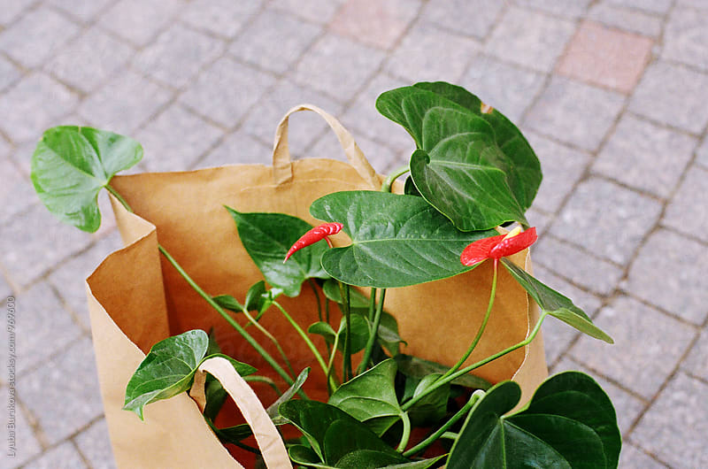 Plant in a craft bag by Lyuba Burakova for Stocksy United