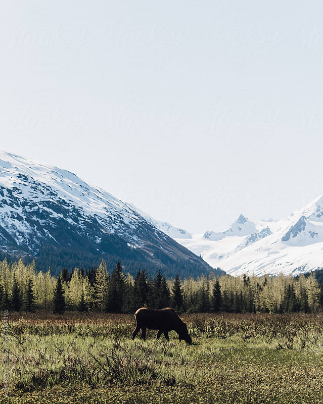 Alaskan Summer by Jovell Rennie for Stocksy United