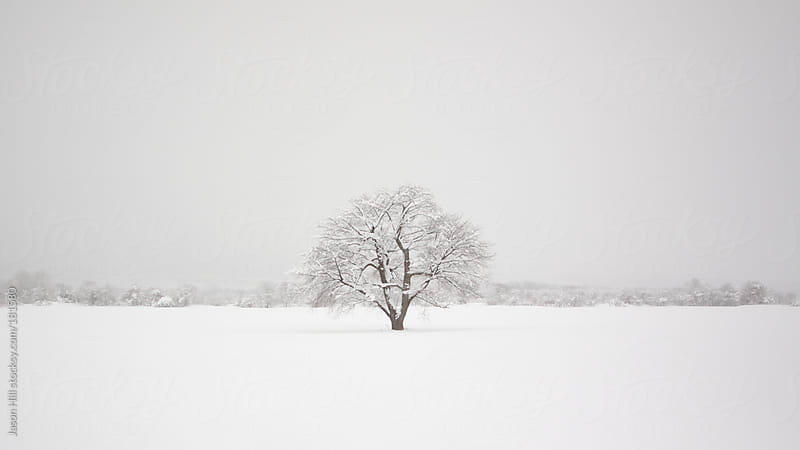 Solitary Cherry Blossom Tree in Winter by Jason Hill for Stocksy United