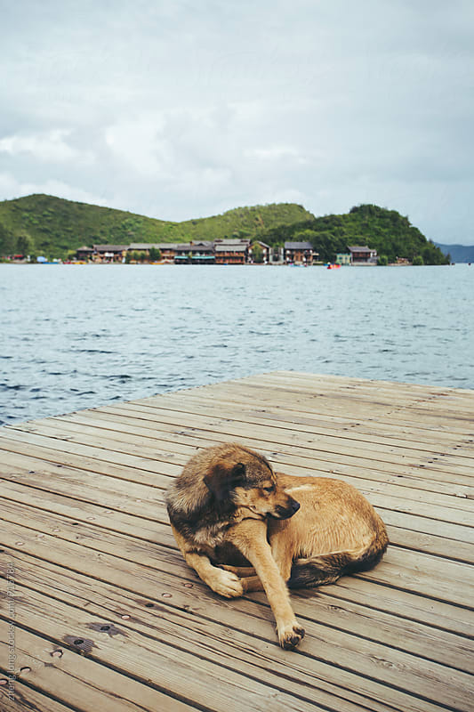 Dog lay on the dock beside Lugu lake  by zheng long for Stocksy United