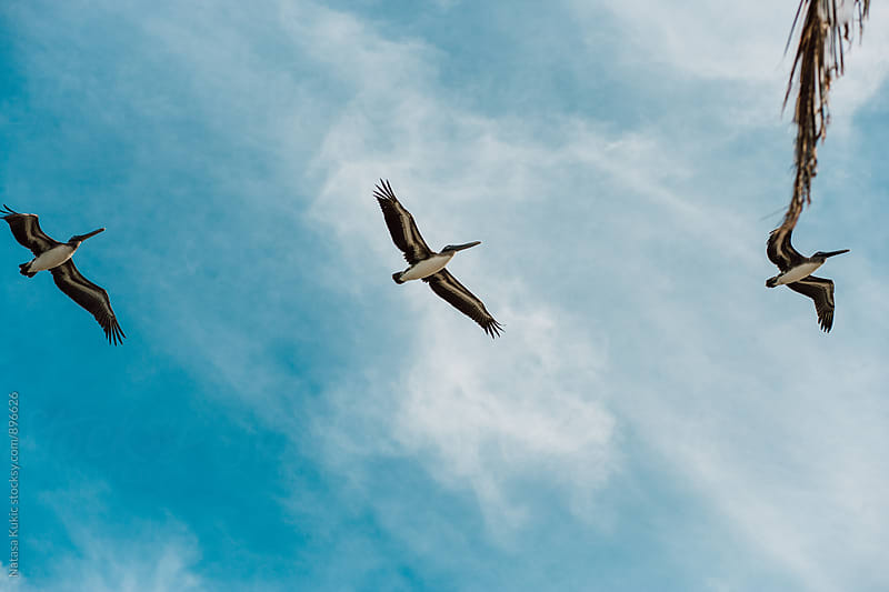 Birds flying by Havana beach by Natasa Kukic for Stocksy United