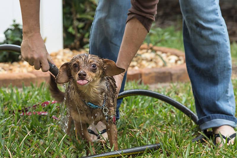 A woman washing a dog by Adam Nixon for Stocksy United