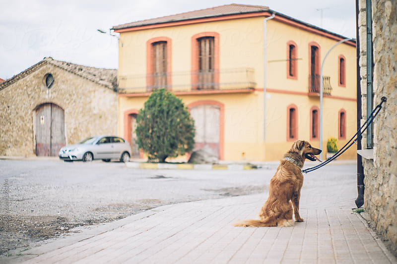Dog on a leash waiting outside. by Eva Plevier for Stocksy United