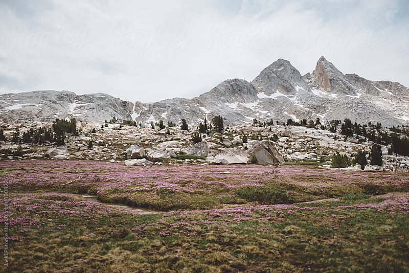 Meadow and Mountains by Jacki Potorke for Stocksy United