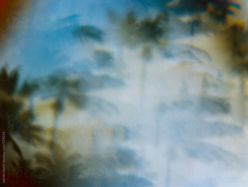 mirrored palm trees by wendy laurel for Stocksy United