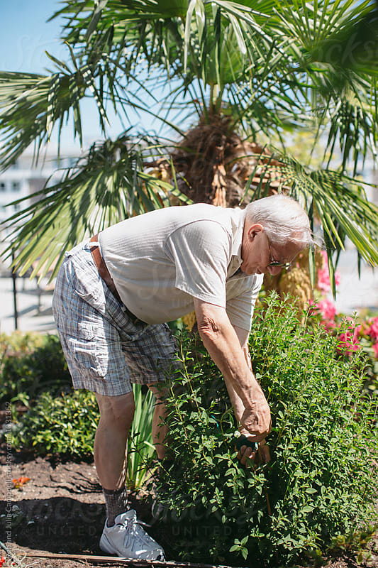 Happy, older caucasian man gardening on sunny day by Rob and Julia Campbell for Stocksy United