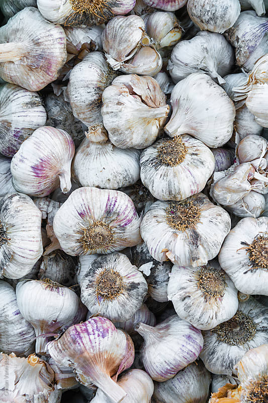 fresh veg market, organic purple garlic by Gillian Vann for Stocksy United
