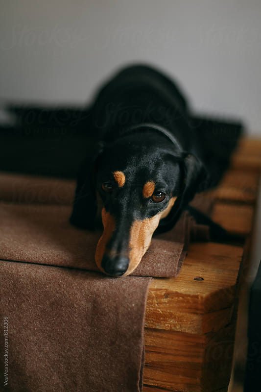 Adorable black dog looking at camera by Marija Mandic for Stocksy United