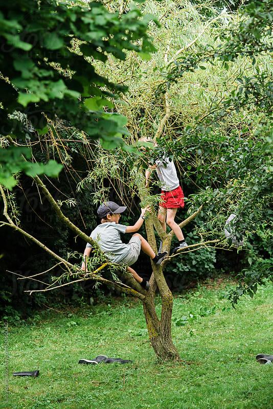 kids climbing a tree by Léa Jones for Stocksy United