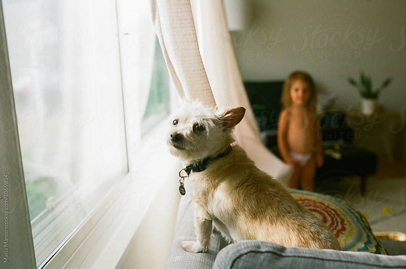 dog looks out window by Maria Manco for Stocksy United