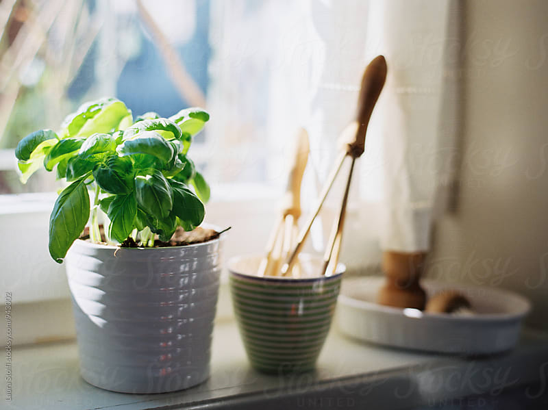 Basil plant and wooden kitchen tools on windowsill, close up by Laura Stolfi for Stocksy United