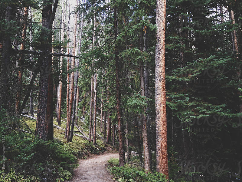 Winding Forest Trail by Kevin Russ for Stocksy United