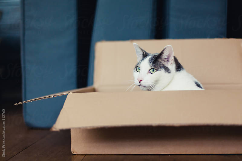 White and grey cat in a cardboard box at home by Cindy Prins for Stocksy United