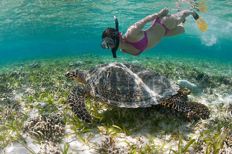 Young woman swims underwater with a sea turtle in shallow clear water by Caine Delacy for Stocksy United