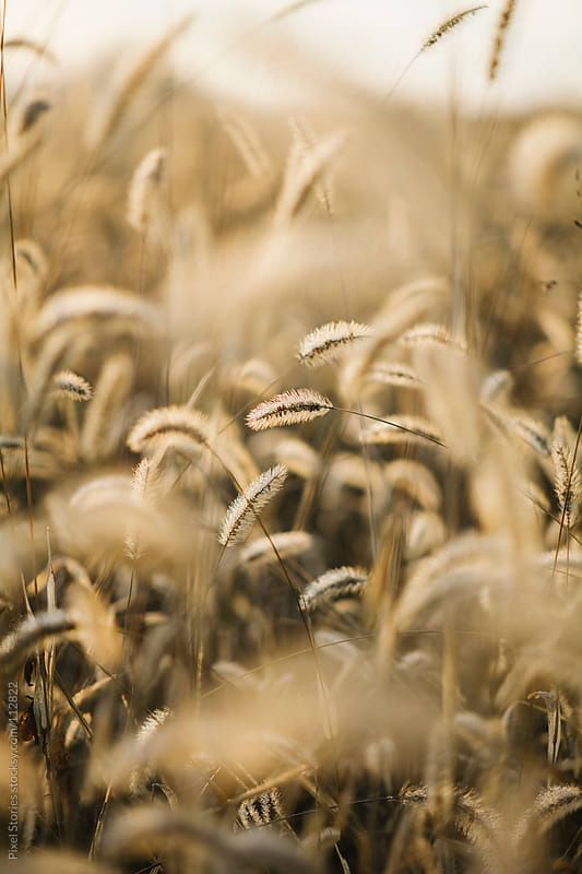 Dry grass by Pixel Stories for Stocksy United