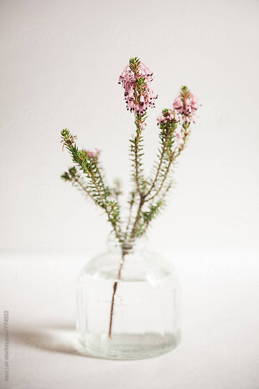 Small  plant stems in a vintage vase by Vera Lair for Stocksy United