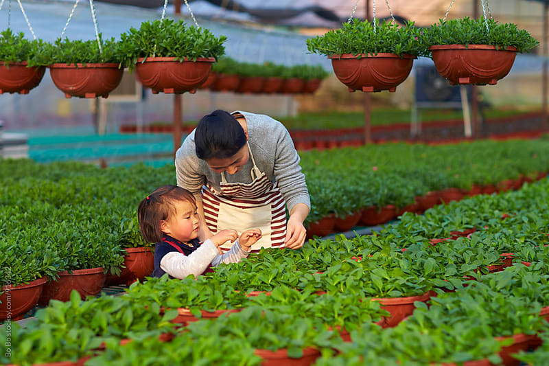 little asian girl working in the flower nursery with her mother by cuiyan Liu for Stocksy United