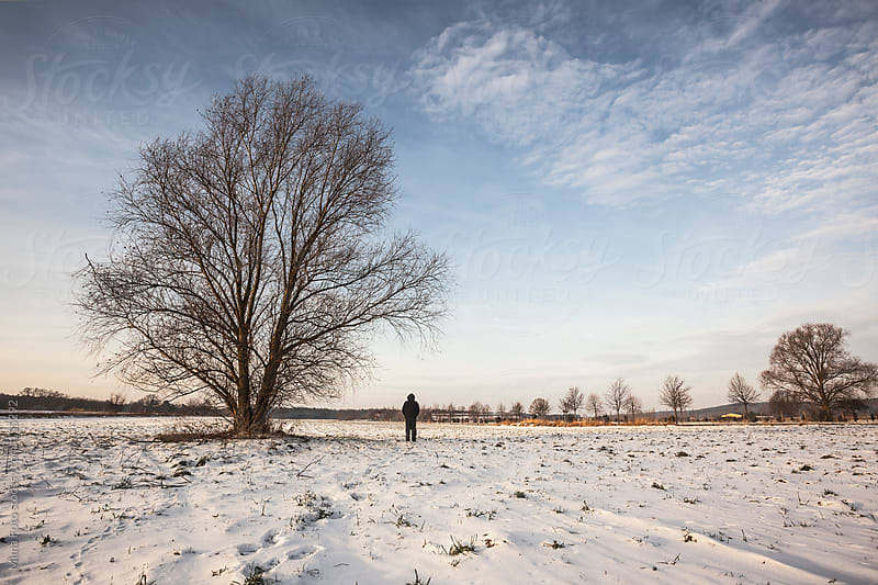The tree and man, winter morning by Mima Foto for Stocksy United