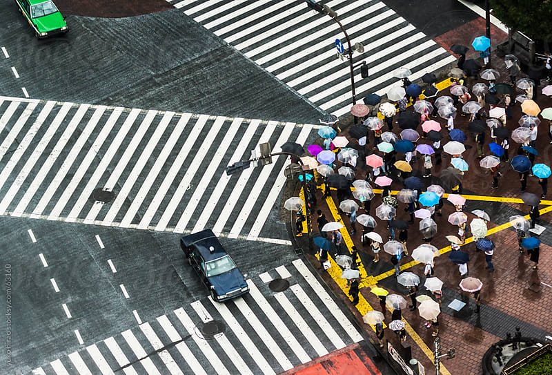 People with umbrellas in rain, waiting at Shibuya Scramble Intersection  by yuko hirao for Stocksy United