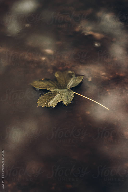 Leaf in a puddle by Jovana Rikalo for Stocksy United