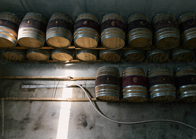 Lines of wine barrels stored at winery by Trent Lanz for Stocksy United