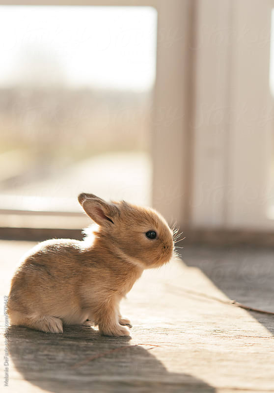 Baby Bunny by Melanie DeFazio for Stocksy United