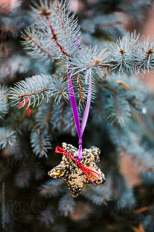 An ornament made of birdseed hangs outside on a fir tree. by Holly Clark for Stocksy United