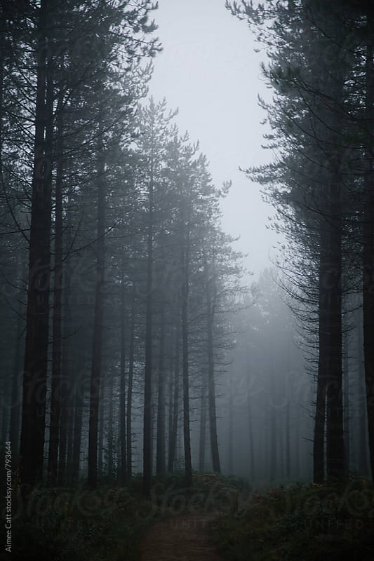 Foggy Woods by Aimee Catt for Stocksy United