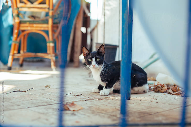House Cat by Aaron Thomas for Stocksy United