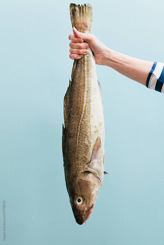 Woman fishmonger holding a large Cod by kkgas for Stocksy United