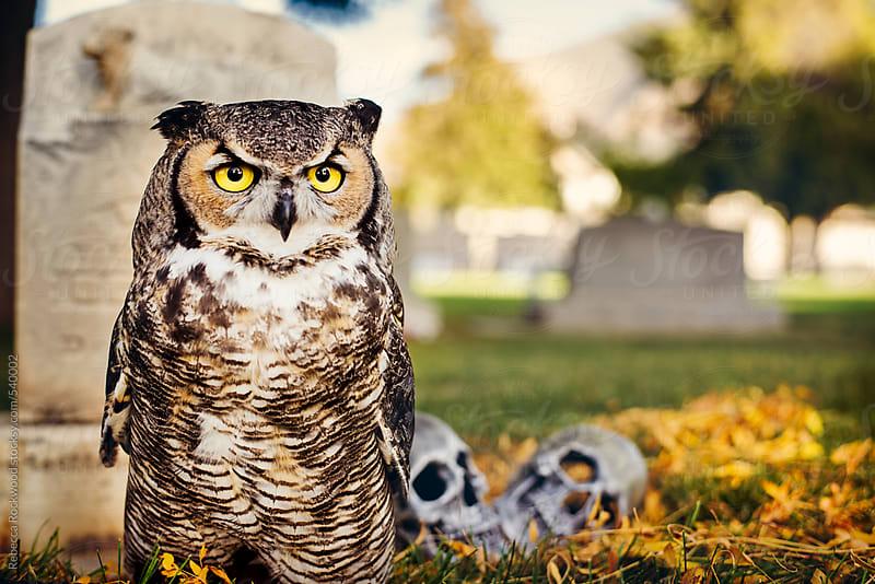 Owl in cemetery by Rebecca Rockwood for Stocksy United