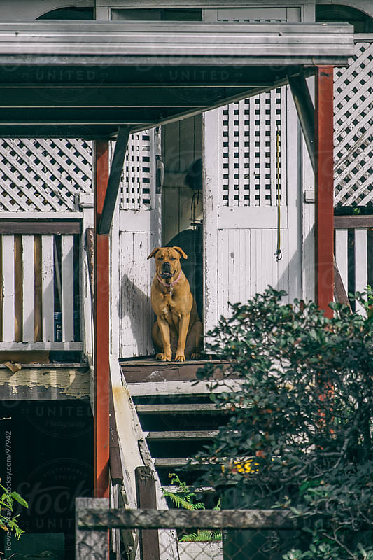 Dog Guarding run-down old house by Rowena Naylor for Stocksy United