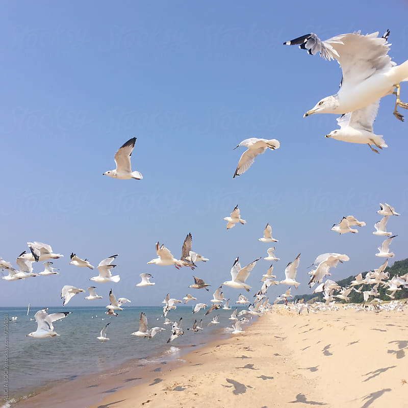 A Flock Of White Seagulls Flying Across A Summer Beach On A Clear Day by ALICIA BOCK for Stocksy United