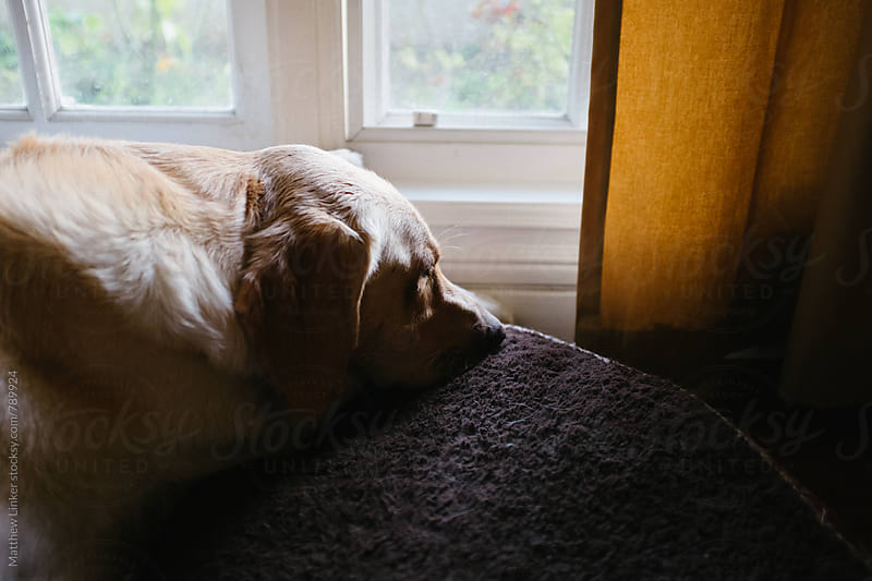 Dog waiting for owner by Matthew Linker for Stocksy United