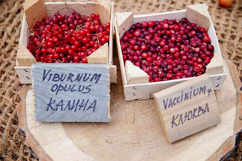 Cranberry and viburnum at market by Andrey Pavlov for Stocksy United