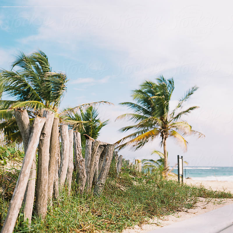 Sloppy fence at the border of beach resort and Dominican jungle by Joey Pasco for Stocksy United