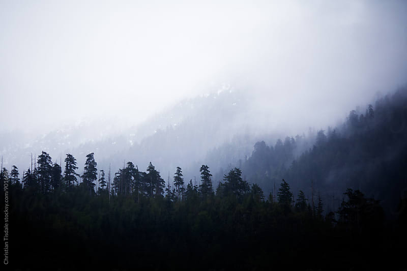 Dark Foggy Treeline in the Mountains by Christian Tisdale for Stocksy United