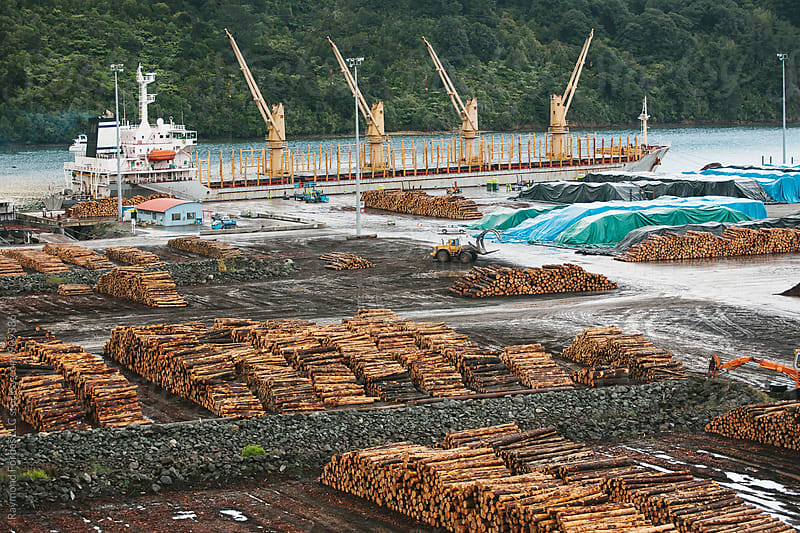 Newly Cut Timber at Shipping Port by Raymond Forbes LLC for Stocksy United