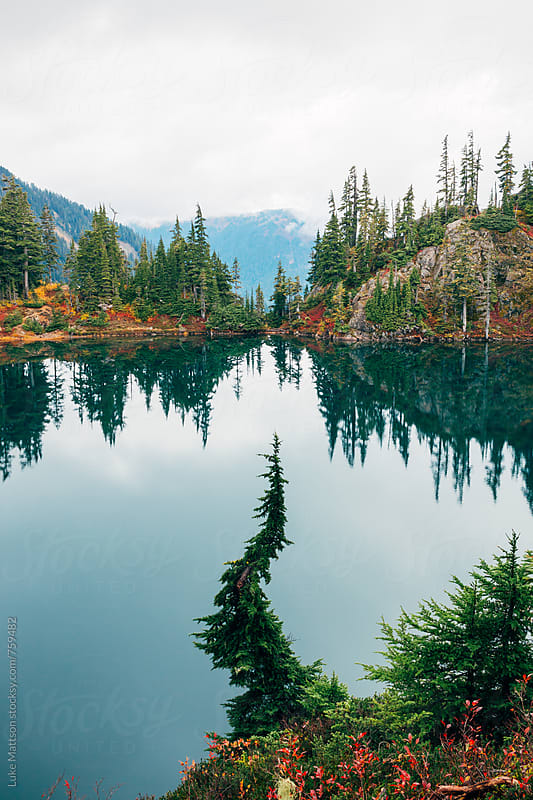 Cork Screwed Subalpine Fir In Front Of Mountain Lake by Luke Mattson for Stocksy United
