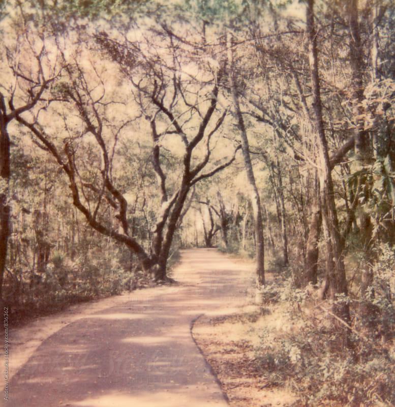 Charleston South Carolina - Polaroid Film by Andrew Cebulka for Stocksy United