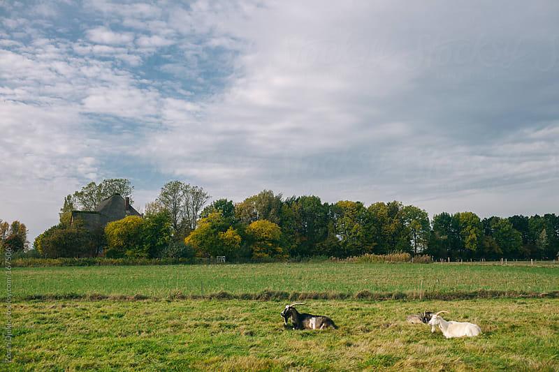 Idyllic rural by Zocky for Stocksy United