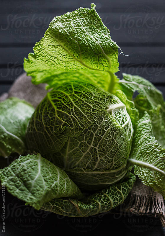 Spring cabbage.  by Darren Muir for Stocksy United