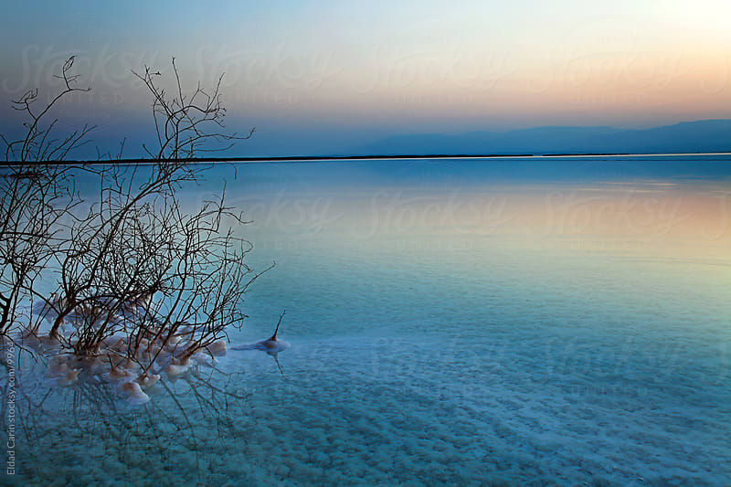 Dead Sea - Withered Bushes at Dawn by Eldad Carin for Stocksy United