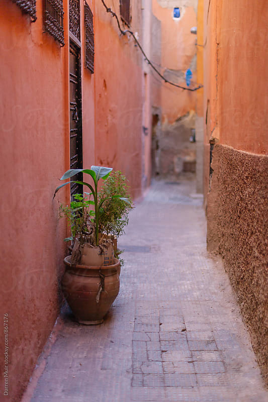 Empty side street in Marrakesh with a single plant in a pot. by Darren Muir for Stocksy United